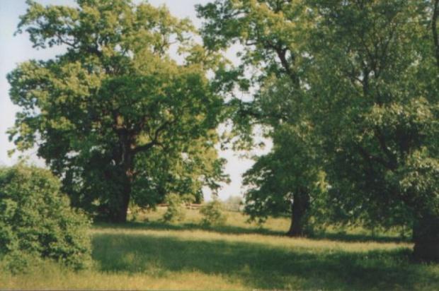 Ustawa o ochronie gruntów, przepisy: odrolnienie działek będzie łatwiejsze