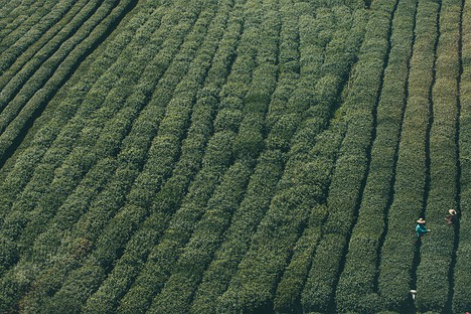 Coraz mniej gospodarstw ekologicznych