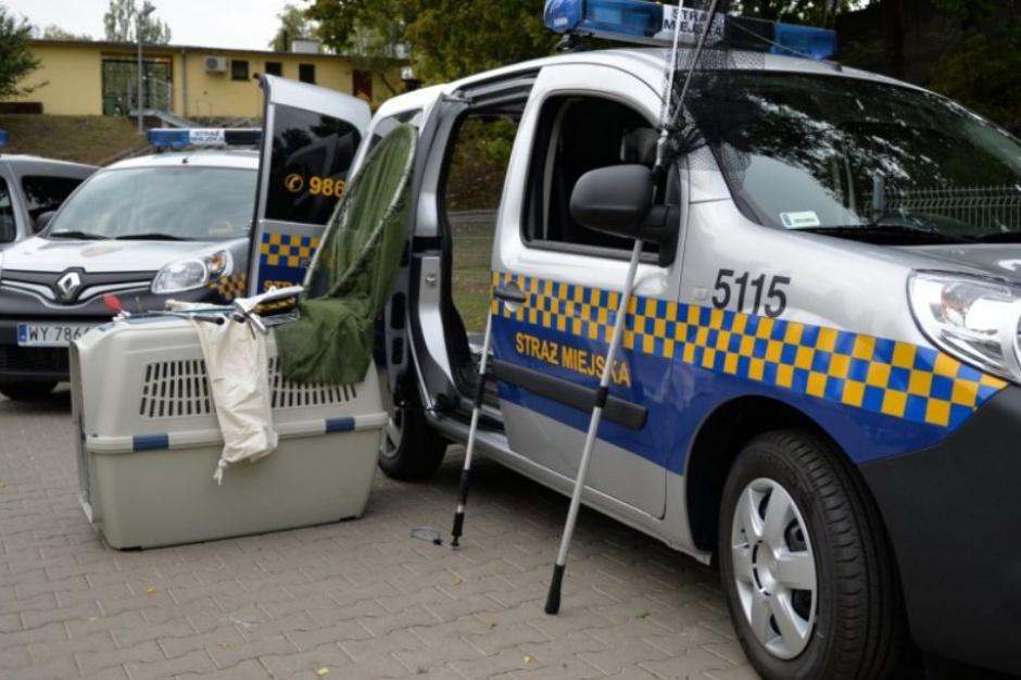 Warszawa ma nowe radiowozy do transportu zwierząt
