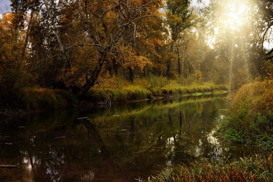 Parki narodowe: 25 mln zł od Lasów Państwowych