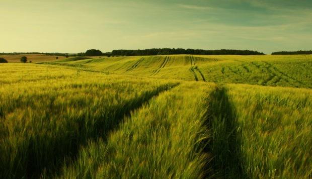 Opłaty za wyłączanie gruntów z produkcji rolnej w gestii marszałków