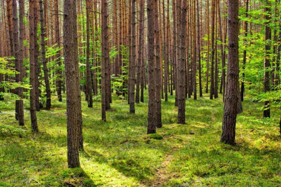 Prezydent zawetował nowelę ustawy o lasach