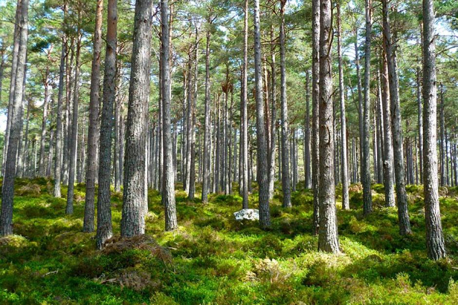 6 mln zł na ochronę sadzonek drzew przed zwierzętami