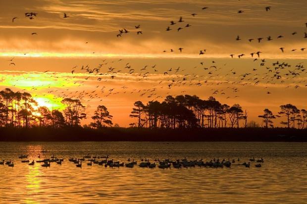 Działania na rzecz ochrony ptaków u ujścia Wisły