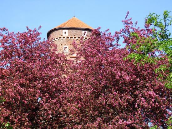 W Krakowie rośliny pomogą walczyć zpyłami