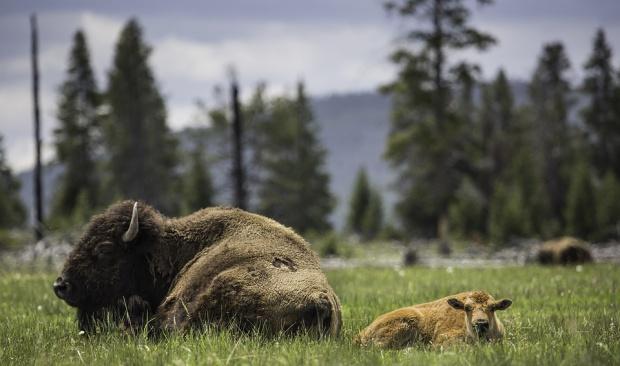 Subwencja ekologiczna: Gminy dostaną zwrot utraconych dochodów za tereny chronione