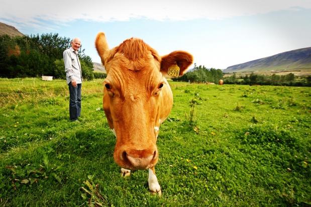 Dopłaty bezpośrednie dla większych gospodarstw: Wypłaty od 19 stycznia 2016 r.