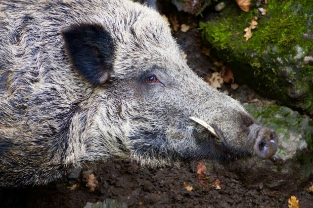 PiS chce korzystnych dla rolników zmian w odszkodowaniach łowieckich