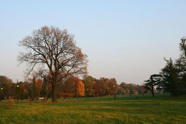 Park w Świerklańcu: 120 tys. na odnowienie i pielęgnację zieleni