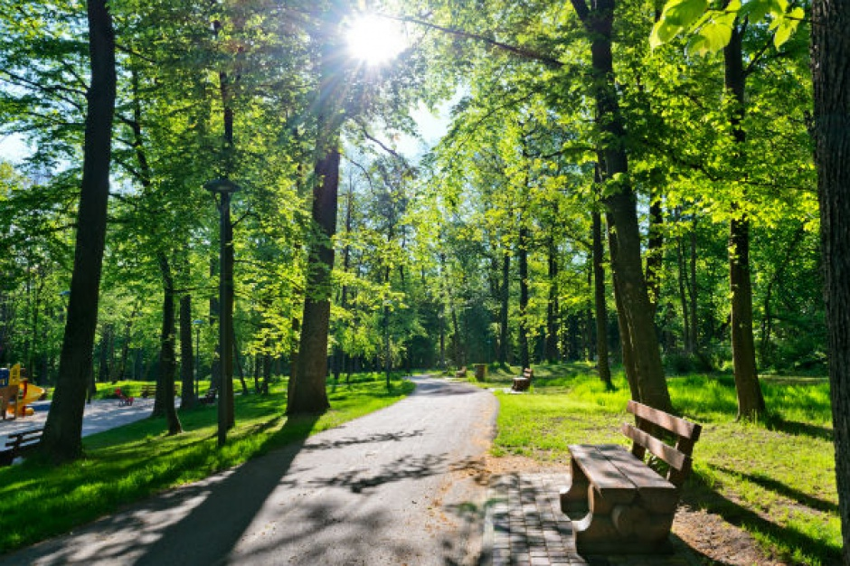 Sosnowiec przygotowuje utworzenie nowego Parku Zagórskiego