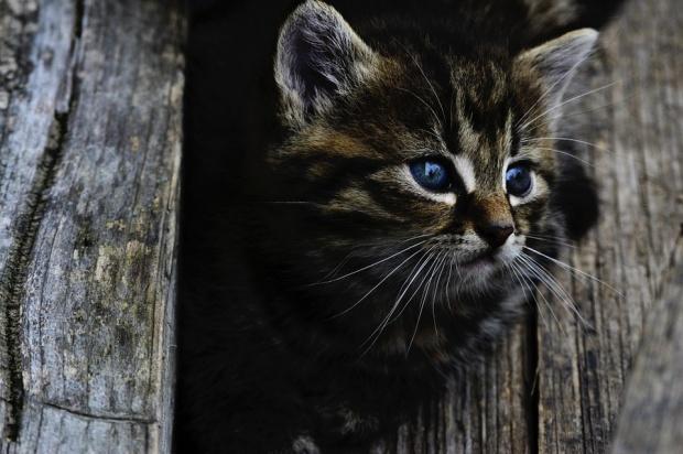 Pomoc dla kotów wolno żyjących