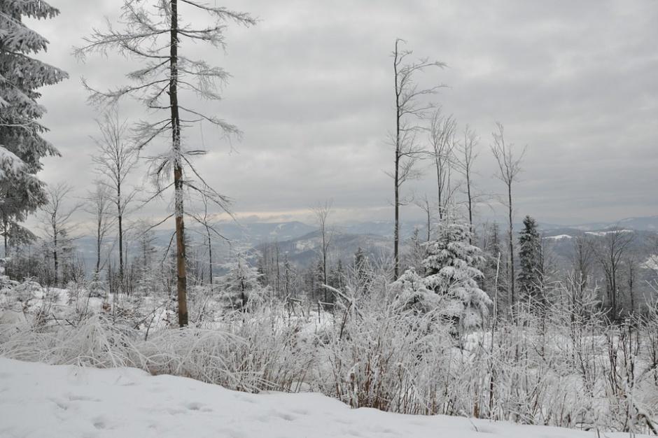Tatry Mountain Resorts: w tym roku nowe atrakcje w Szczyrku i Chorzowie