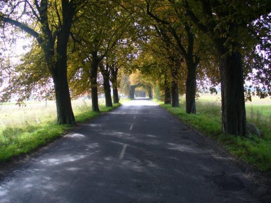 Dolnośląskie, drogi lokalne: Dofinansowanie na remonty lub budowę 55 km dróg