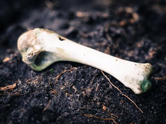 Śląsk: Szczątki mamuta znaleziono w stawie na pograniczu Wodzisławia Śląskiego i Syryni