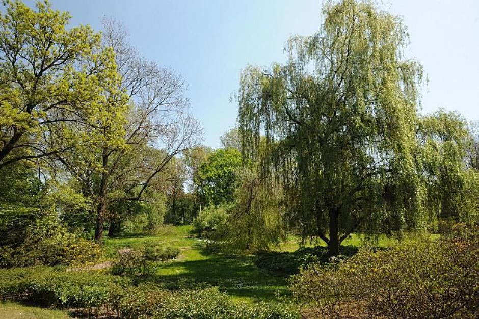 Ruszyły prace w parku Aleksandry