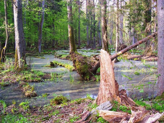 Petycja do premier Szydło: Cała Puszcza Białowieska powinna stać się parkiem narodowym