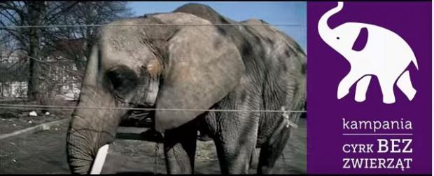 Tychy nie chcą cyrków ze zwierzętami