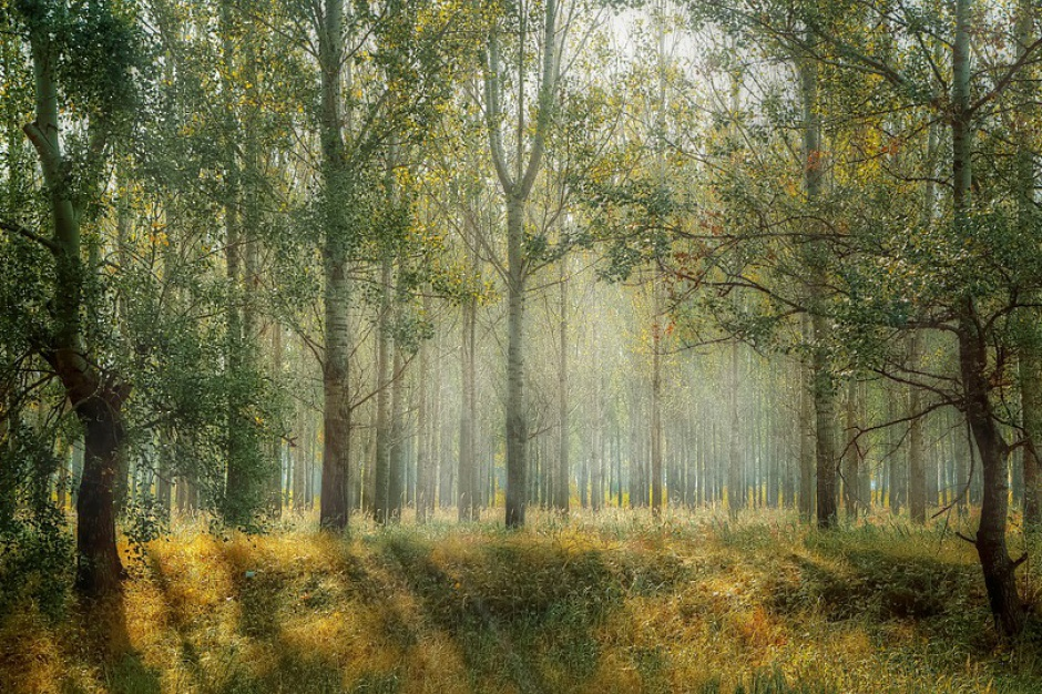 Podkarpackie sadzi lasy
