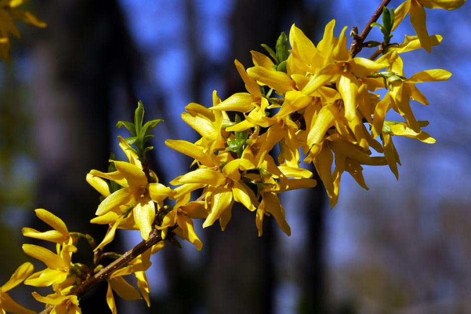 20 marca rozpocznie się astronomiczna wiosna