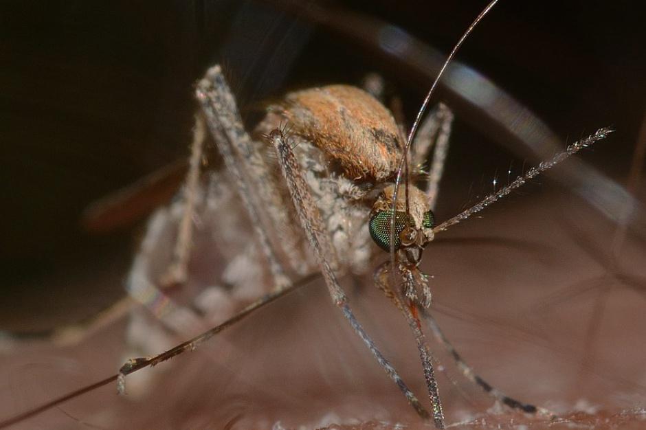 Wrocław wyda ponad 800 tys. zł na walkę z komarami