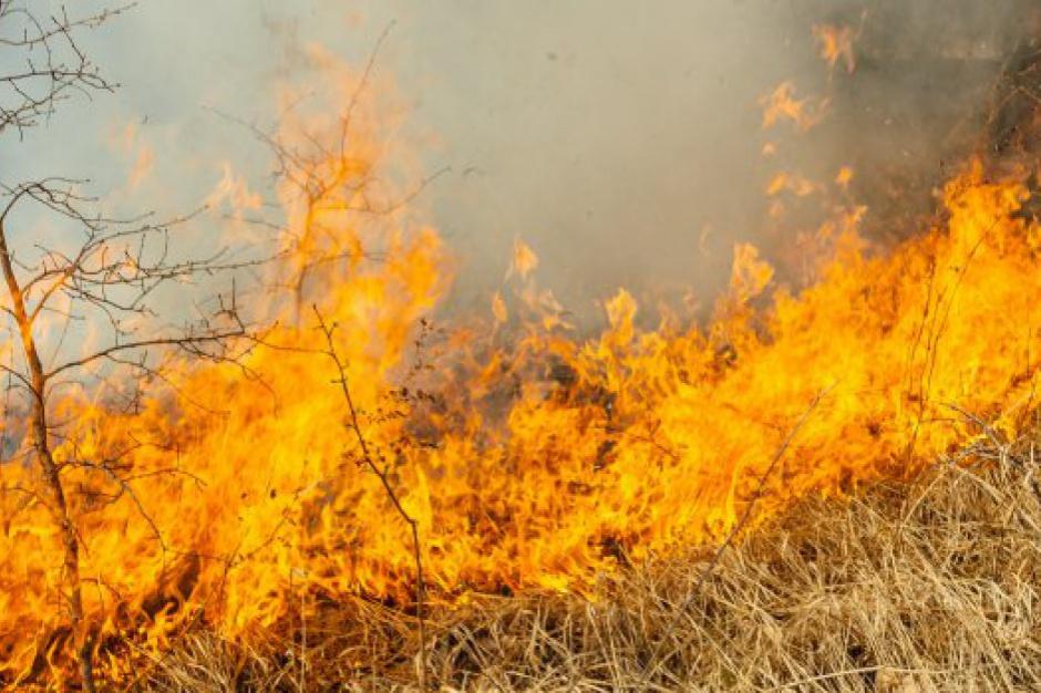 Wypalanie traw: Jest pierwsza ofiara w tym roku