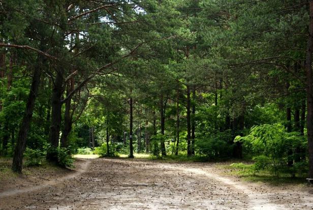 Wykup lasów prywatnych: Od 1 maja Lasy Państwowe będą mieć pierwszeństwo