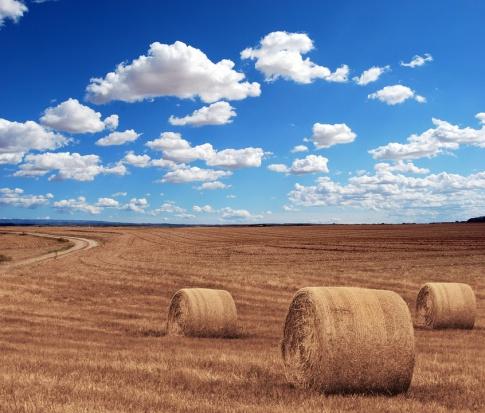 Geotermia i biomasa sposobem na czyste powietrze?