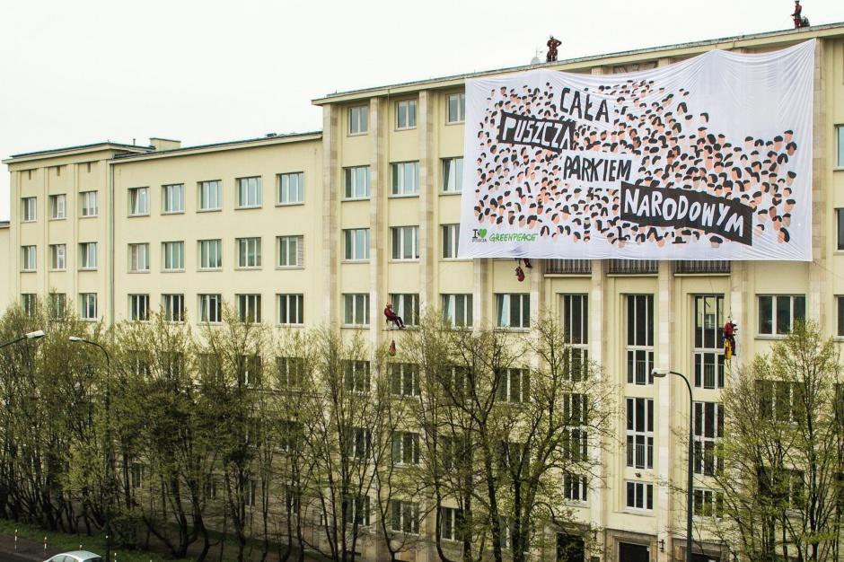 Apel Greenpeace do rządu: Cała Puszcza Białowieska powinna być parkiem narodowym