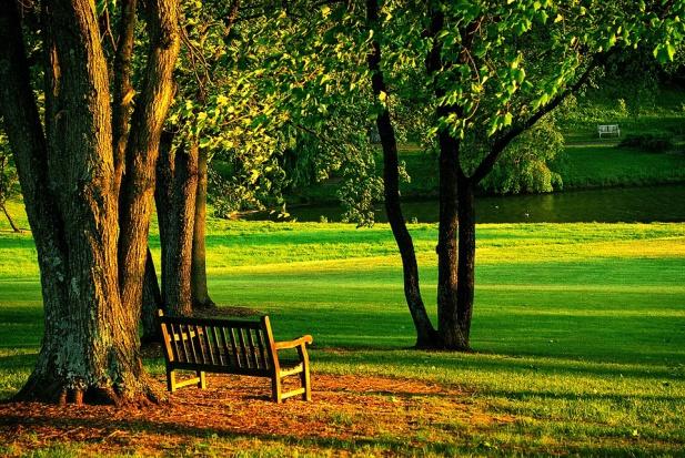 Parki w miastach: Jest ich coraz mniej. Jak samorządy mogą rozwiązać ten problem?
