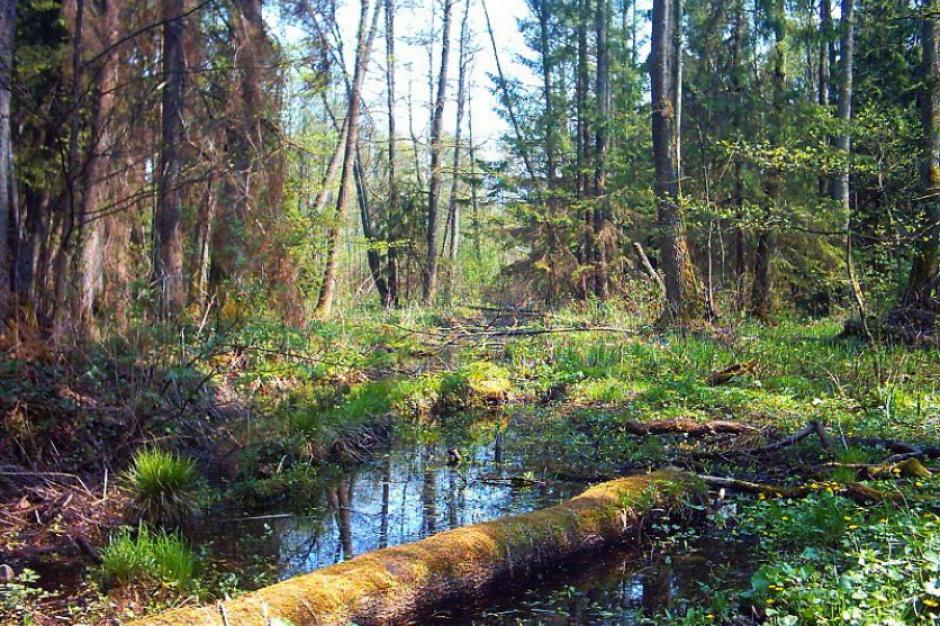 Puszcza Białowieska: Tereny referencyjne dostępne dla turystów