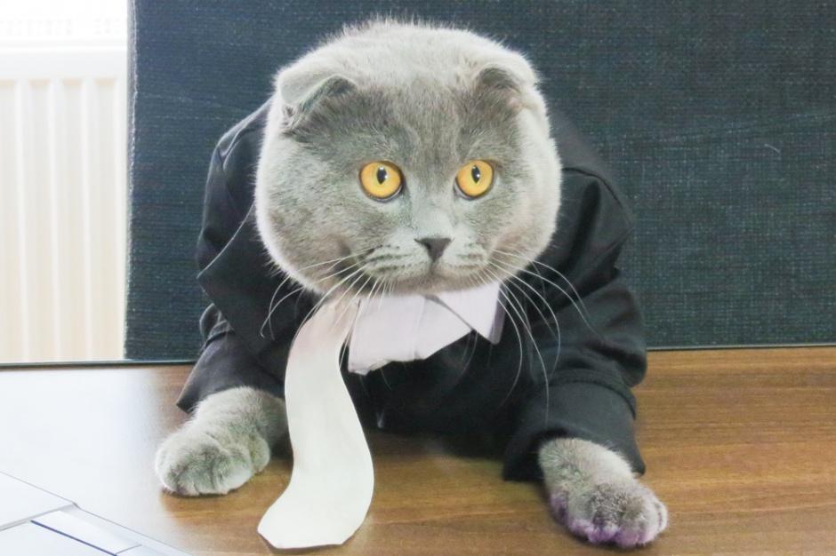 Świnia może być burmistrzem, a kot urzędnikiem