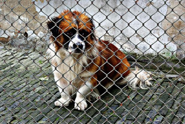 Ochrona zwierząt: Hycle łapią tego samego psa po kilka razy