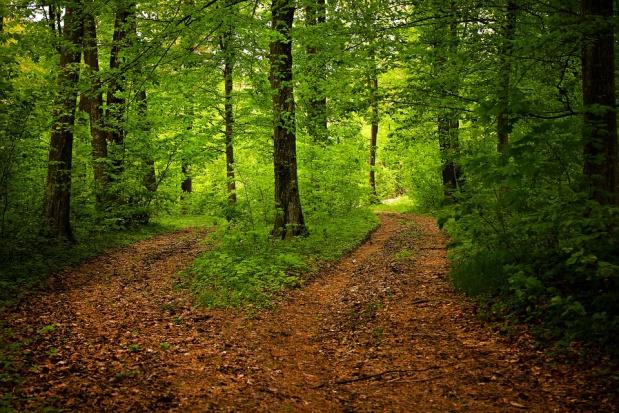 Emisja CO2: Gdzie leśne gospodarstwa węglowe?