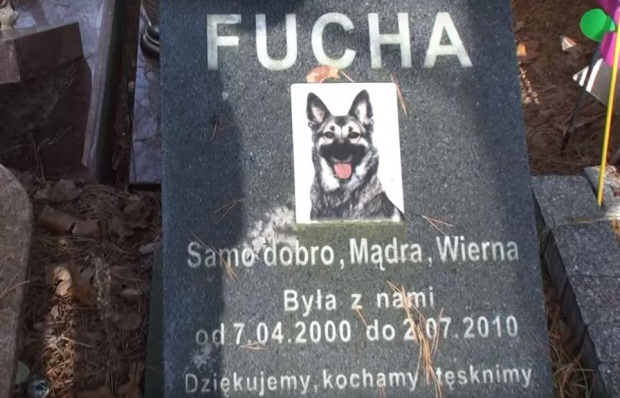 Budowa krakowskiego cmentarza dla zwierząt się opóźni