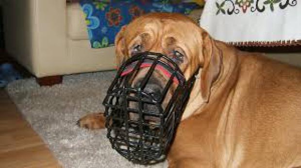 Nakaz używania kagańców dla psów nie wchodzi w kompetencje rady gminy (fot.molosy.pl)