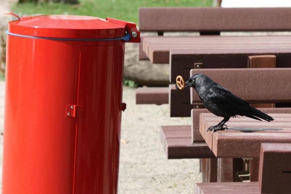 Styś, odpady: Odbieranie śmieci może odbywać się bez przetargu