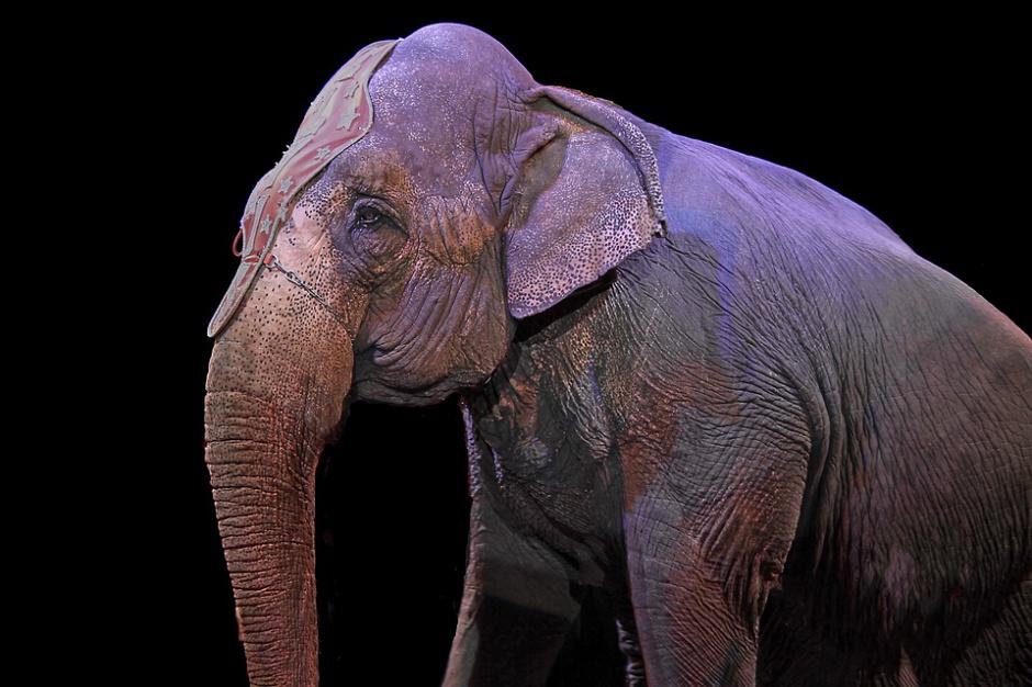 """Zielona Góra mówi """"nie"""" wykorzystaniu zwierząt w cyrku"""