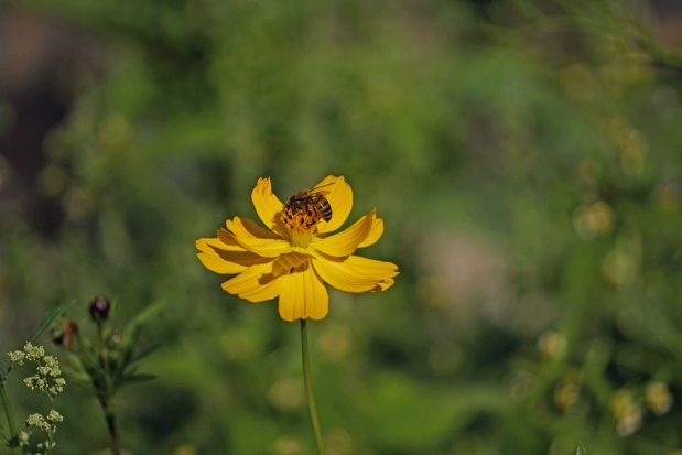 W nadleśnictwie Rymanów będą przypominać symbiozę lasu i pszczół