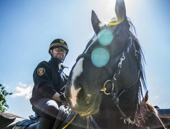 Strażnicy na koniach z budżetu obywatelskiego