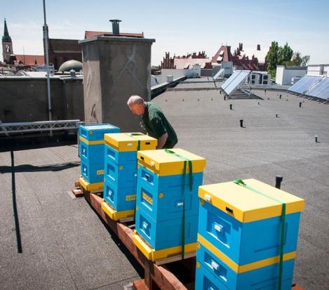 Pasieka stanęła na dachu urzędu marszałkowskiego