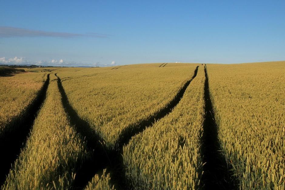 Przepisy dotyczące obrotu ziemią rolną już po nowelizacji
