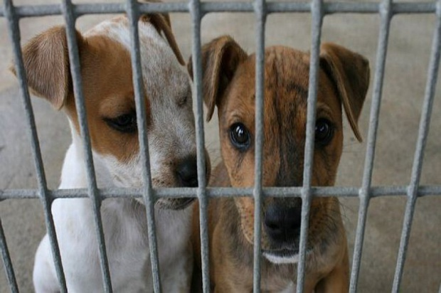 W ocenie NIK, dofinansowywanie przez gminy dobrowolnej sterylizacji zwierząt posiadających właścicieli może być istotnym elementem zapobiegania bezdomności zwierząt (fot.fotolia)