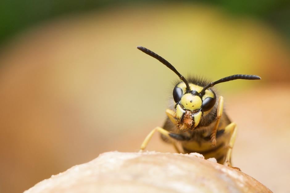 Szpital w Chmielniku będzie odczulał na jad os, pszczół i szerszeni