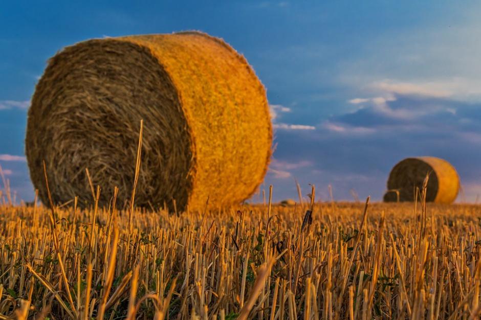 Senacka komisja rolnictwa nie ma uwag do nowelizacji ustawy o kształtowaniu ustroju rolnego