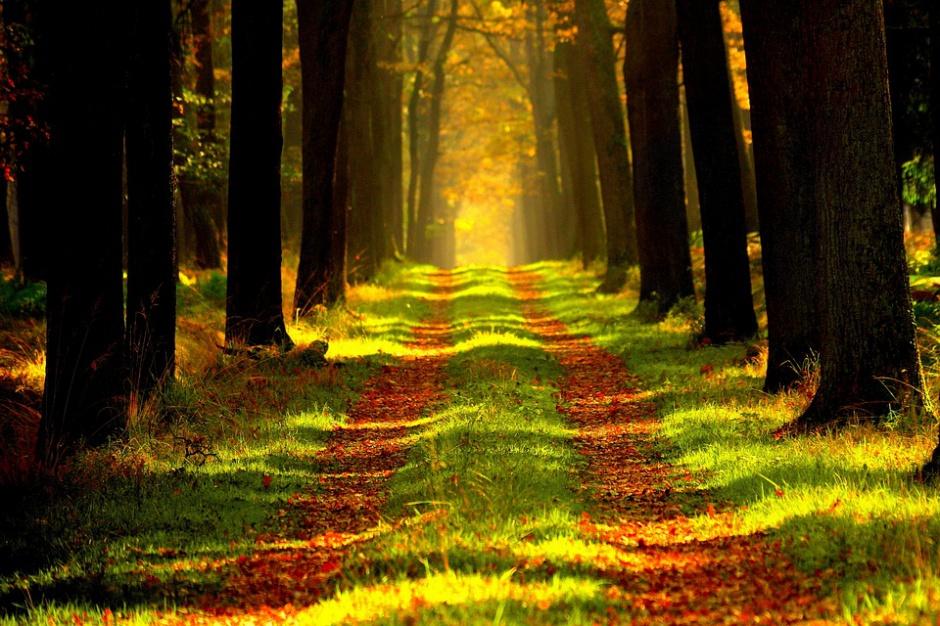 Komisja za odrzuceniem projektu nowelizacji ustawy o lasach
