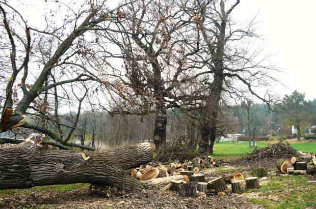 Ustawa o ochronie przyrody: Gminy nie chcą wycinki drzew. Boją się katastrofy