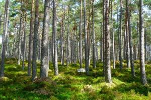 7 mln na działania przyrodnicze w sercu Śląska