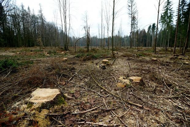 Ustawa o ochronie przyrody: Związek Gmin Wiejskich pozytywnie o projekcie ustawy