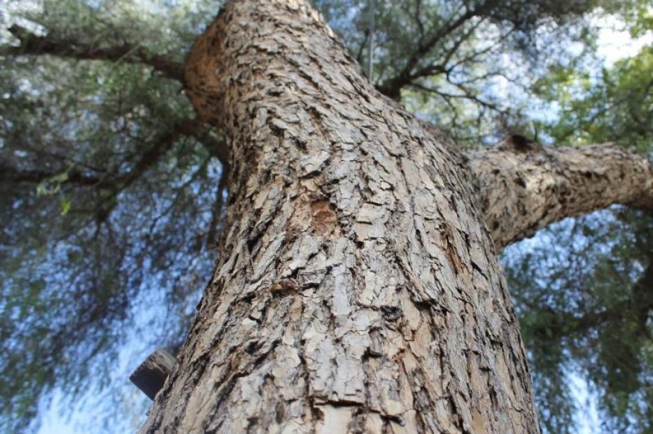 Ustawa o ochronie przyrody, wycinka drzew: Decyzje w rękach gmin, ale drzewa nadal chronione