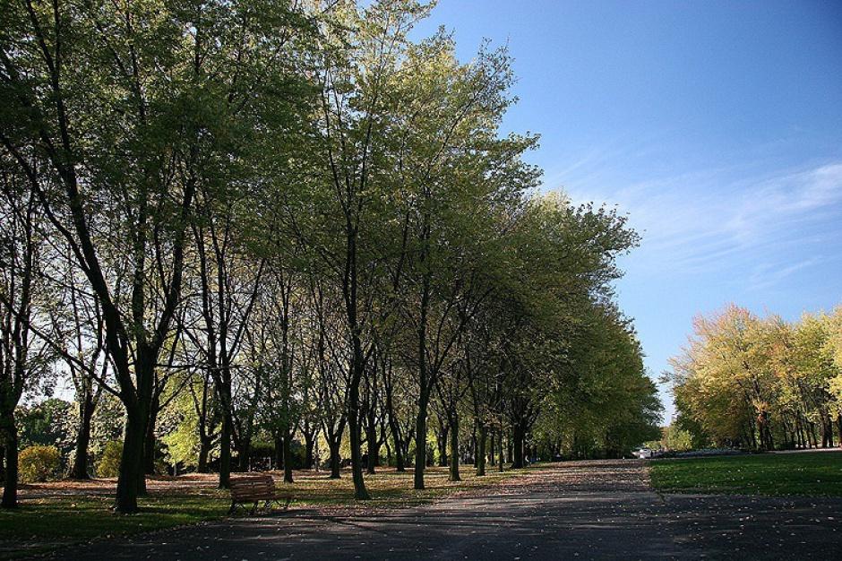 Nabór wniosków: Unijne wsparcie dla ochrony przyrody w Aglomeracji Górnośląskiej